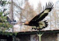 vogel13