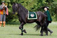 pferd01
