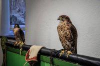 Vogelpraeparate-im-Museum