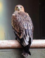 vogel01